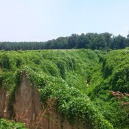Earthquake landforms covered by Kudzu on the way to Village Creek State Park.
